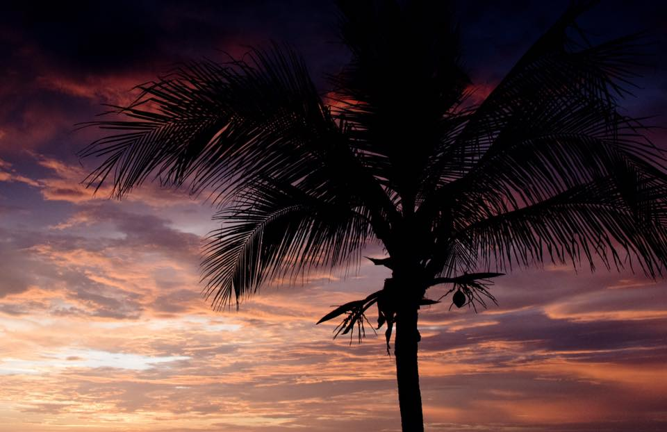 Palm tree silhouette and a beautiful sunset in Costa Rica.Photographed by Kristen M. Brown, Samba to the Sea Photography.