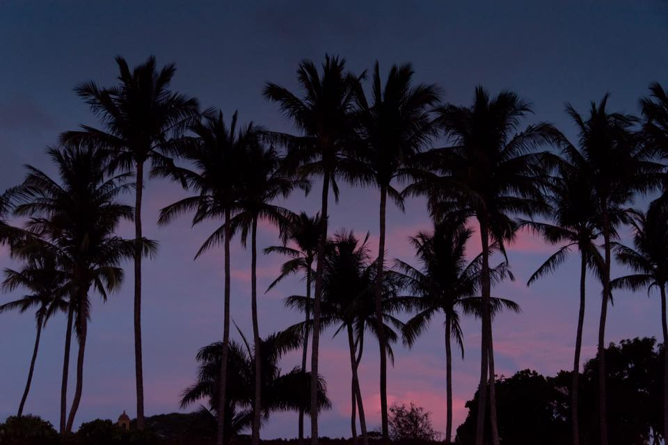 Palm tree silhouette sunset in Tamarindo, Costa Rica. Photographed by Kristen M. Brown, Samba to the Sea.