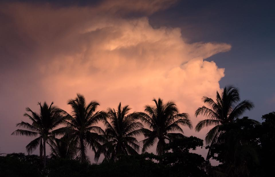 Palm tree silhouette against dramatic pink clouds. Photographed by Kristen M. Brown, Samba to the Sea Photography.