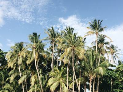Palm trees in Tamarindo, Costa Rica. Photographed by Samba to the Sea Photography.